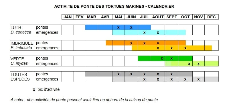 Calendrier Ponte Tortues Martinique