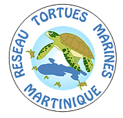 tortuesmarinesmartinique