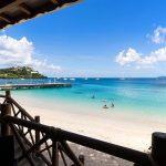 Bambou Martinique (1)