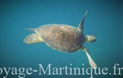 sortie dauphins tortues