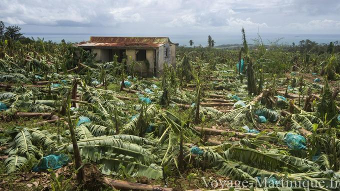 ouragan bananeraie