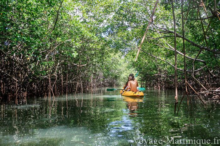 Kayak Mangrove Martinique