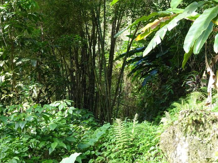 Végétation Randonnée Montagne Vauclin