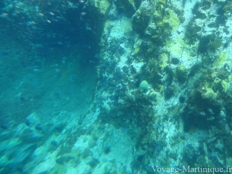 Fonds Sous Marins Martinique