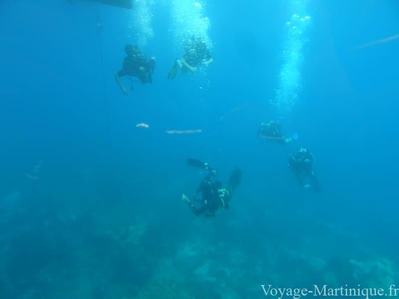 Plongeur Martinique